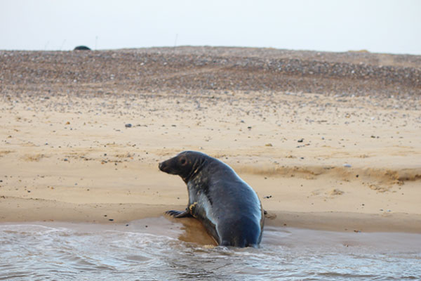 seal spotting norfolk trips